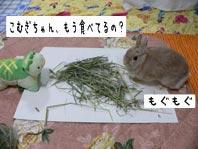 いきなり食べる