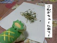 見た目にちがうな〜