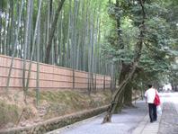 りっぱな竹やぶ