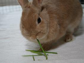 茎もおいしい〜