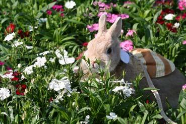お花の中に入っちゃった。怒られる〜