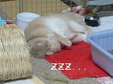 よく寝てたね