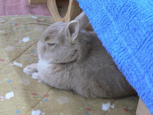 眠いのよ〜
